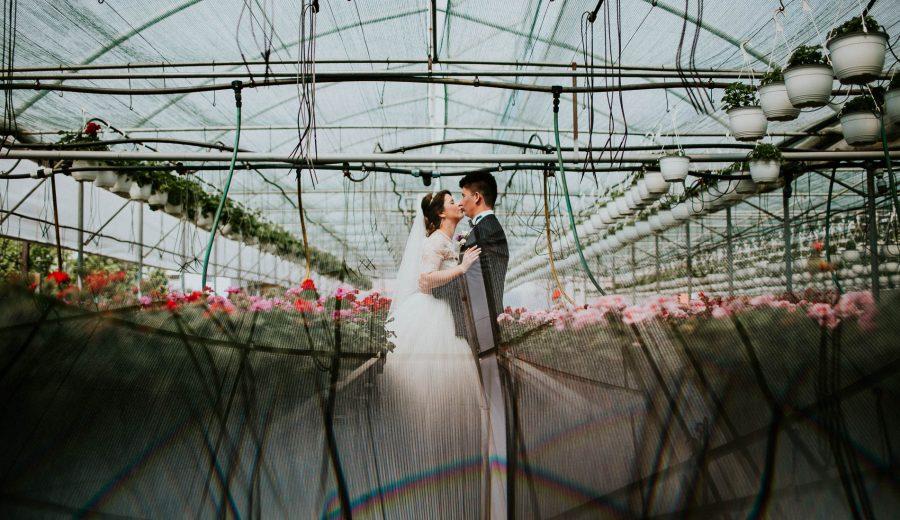 fotograf nunta mures romania